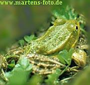 Martens Foto
