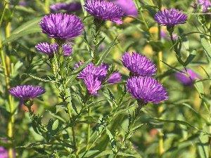 HEP Garden - (C) Photo by HEP October 2005