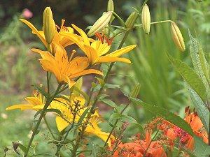 HEP Garden 2005 (C)